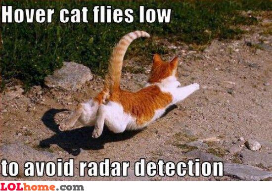 Hover cat flies