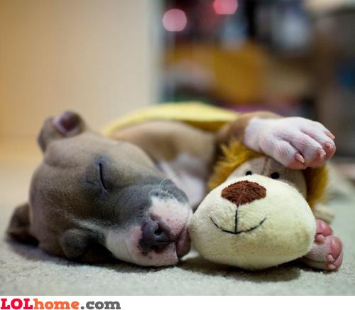 Best friends at sleep