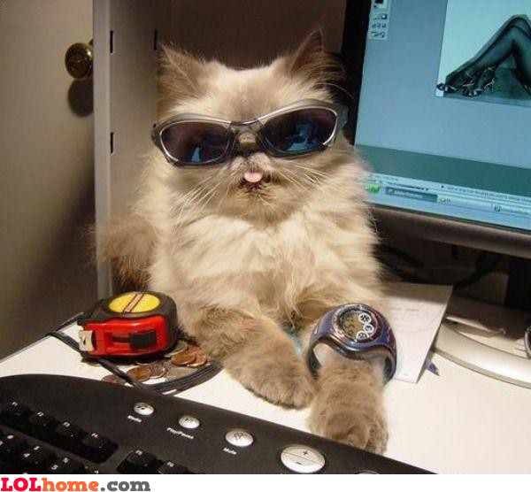 Cat with swag