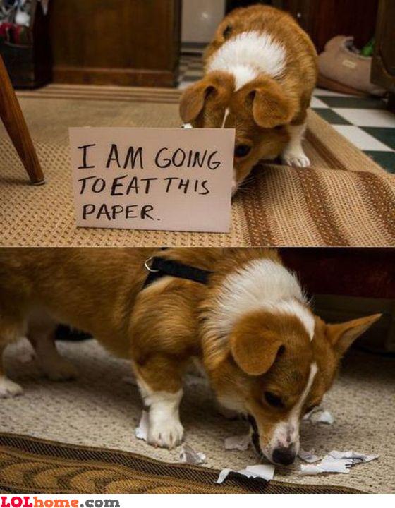 So predictable dog