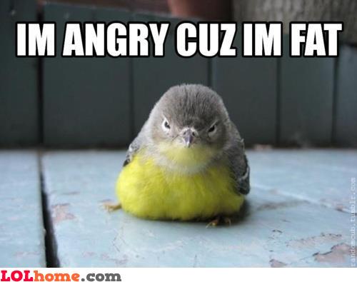 Fat Parrot
