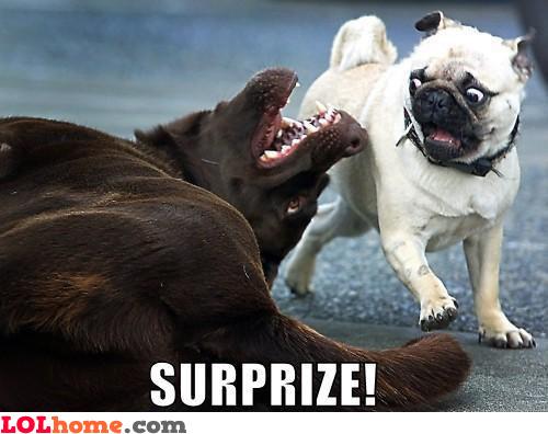 Surprize!