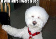 Will Ferrell as a dog