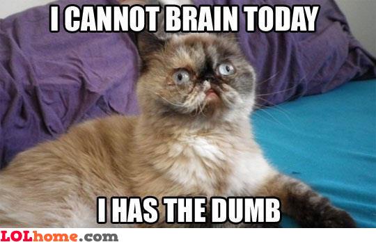 Dumb cat