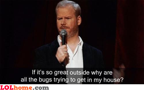 Bugs, what's wrong with you?