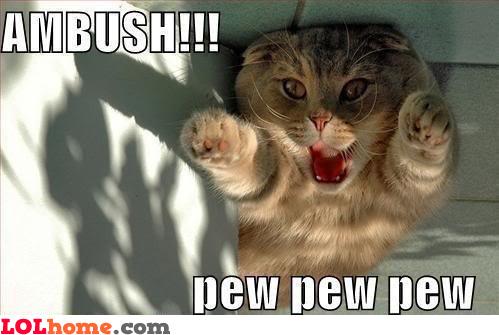 Cat's ambush!