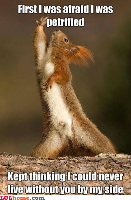 Singing Squirrel