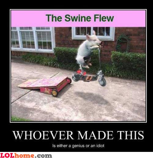 The Swine Flew