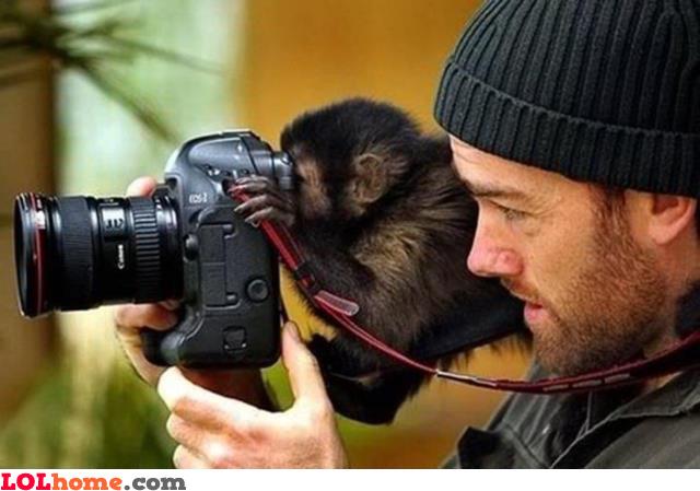 Monkey shot