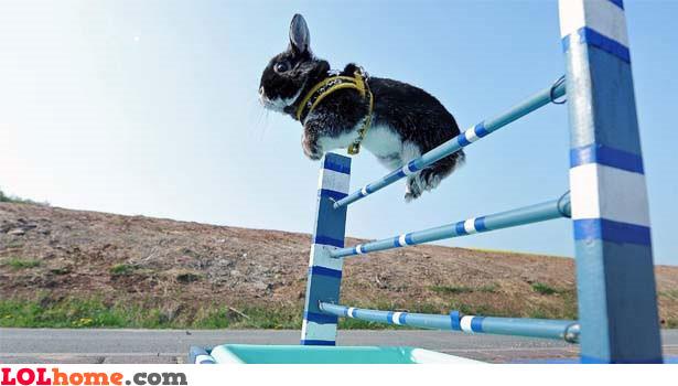 Olympic rabbit