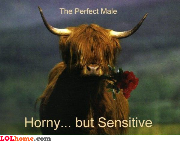 The perfect male. Horny... but sensitive