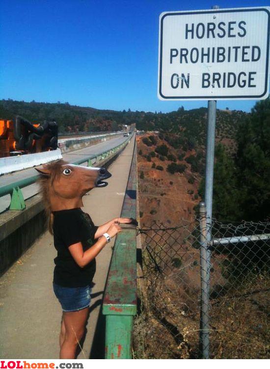 Horse, go away!