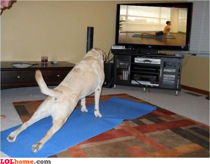 Dog working-out