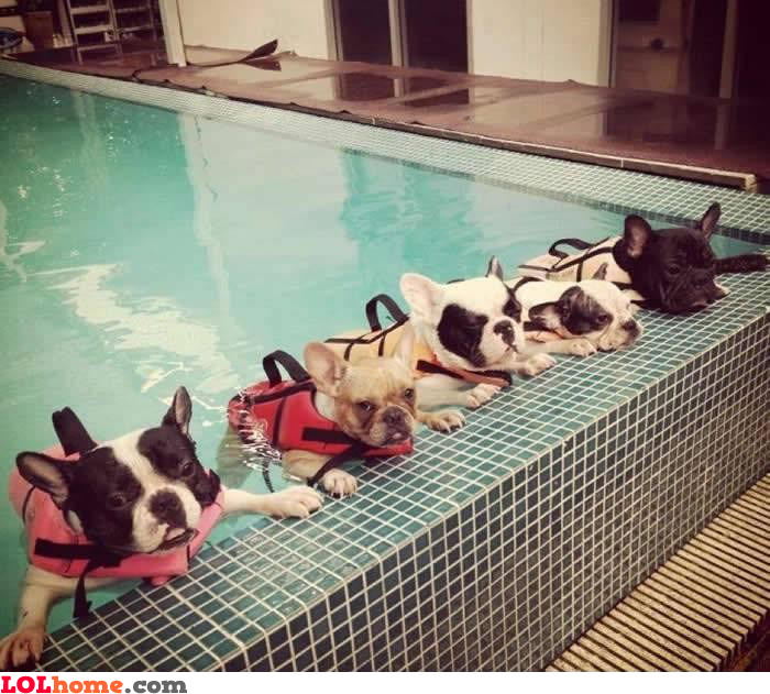 Dogs chilling in the pool