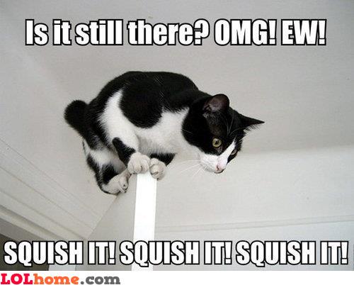 Ughhhh, squish it!