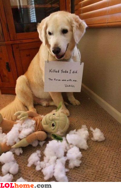 Killed Yoda I did