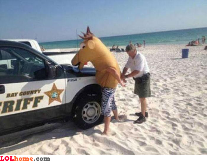 Busted horse