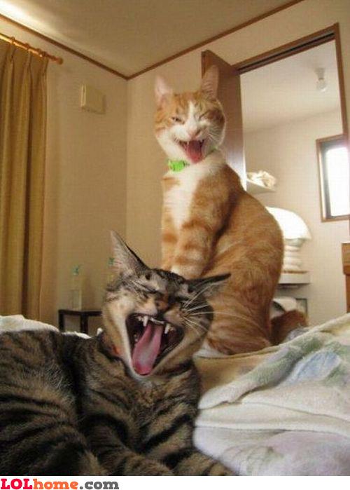Let's scream!