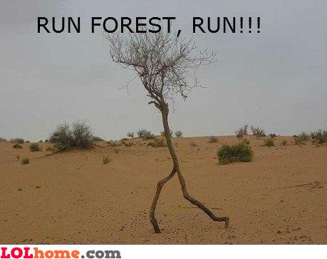 Run Forrest!