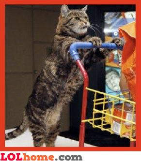 Kitty shopping