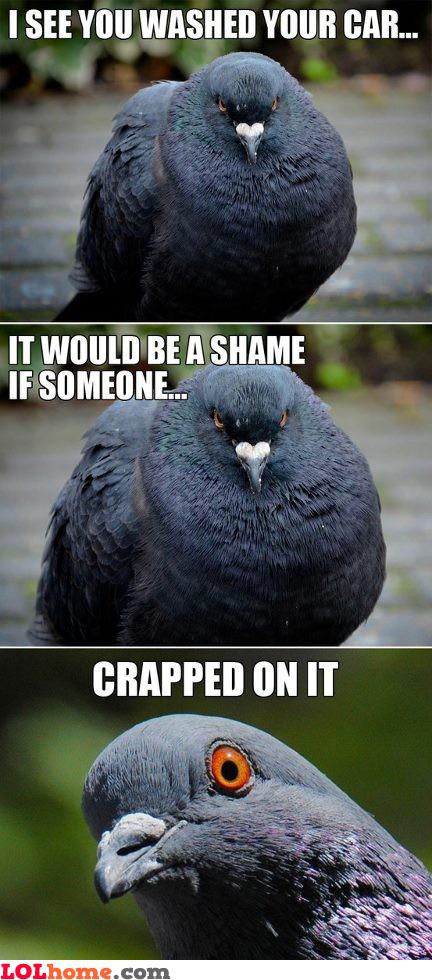 Bird... that bird..