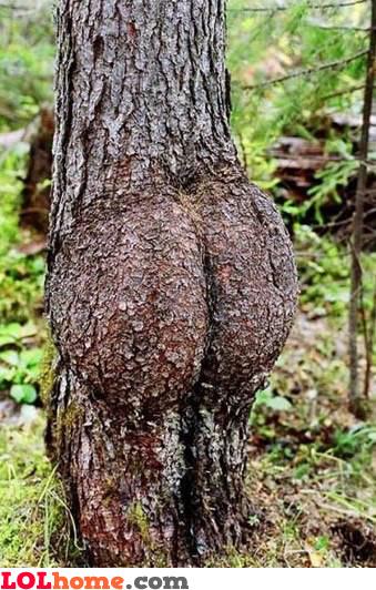 Tree Butt 6