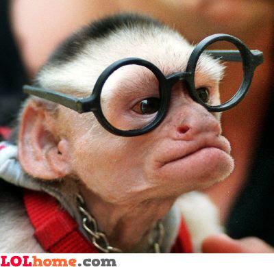 Monkey geek