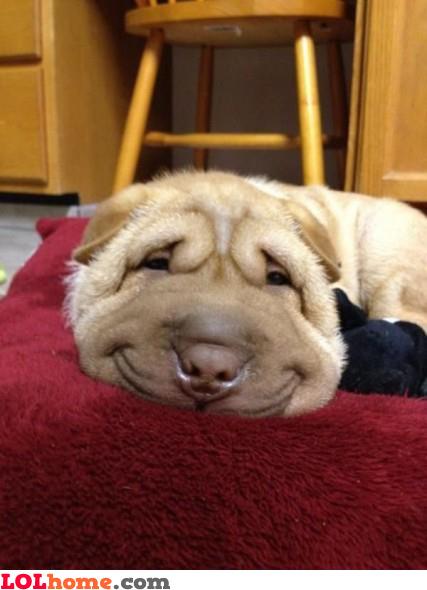 Dog smiling