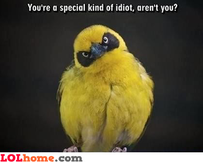 Special kind of idiot?