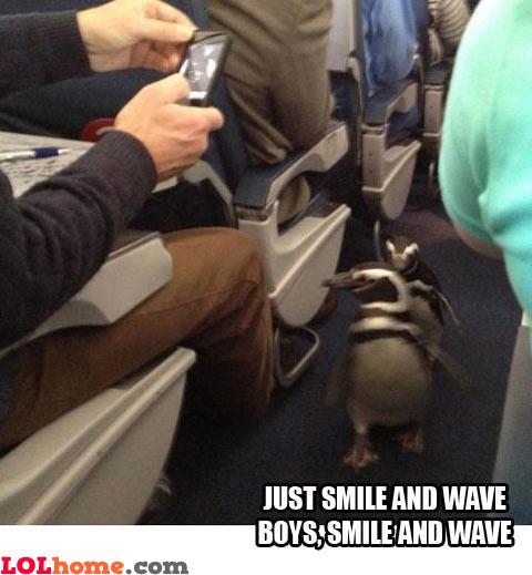 Le Penguins