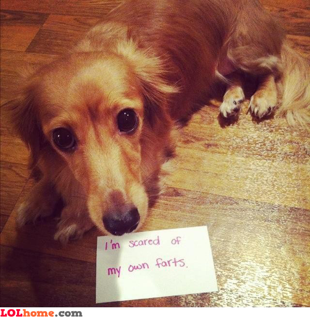 Sincere dog