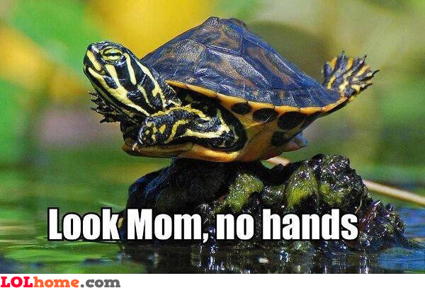 Mother Turtle