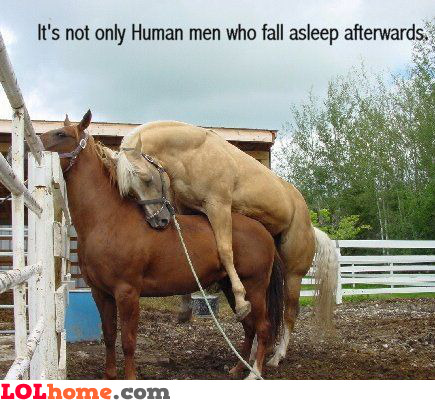 It's not only human men who fall asleep afterwards