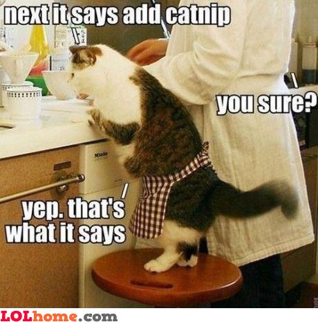 Someone wants catnip