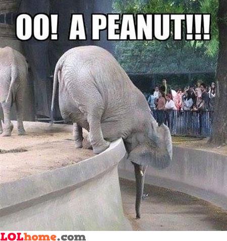 Oh, a peanut!