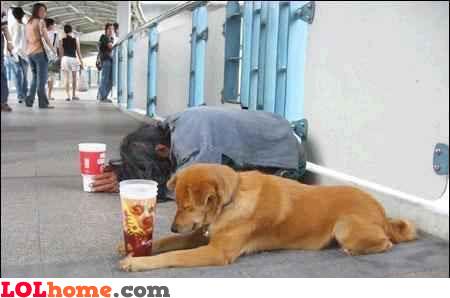 Dog beggar