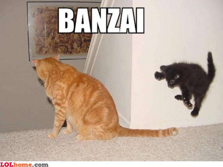 BANZAAAAI!