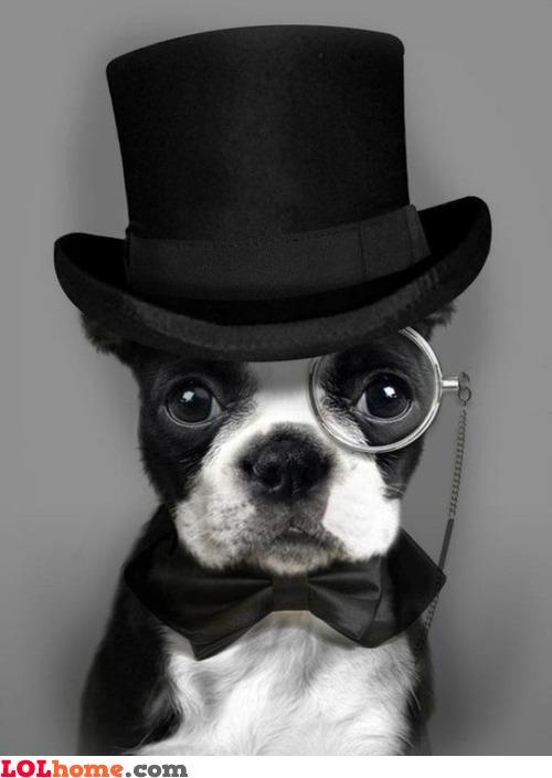 Monsieur dog