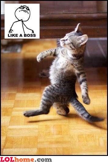 Walking like a boss