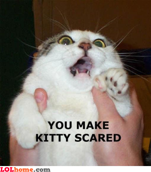 Epic scared kitty