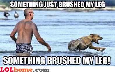Something brushed my leg