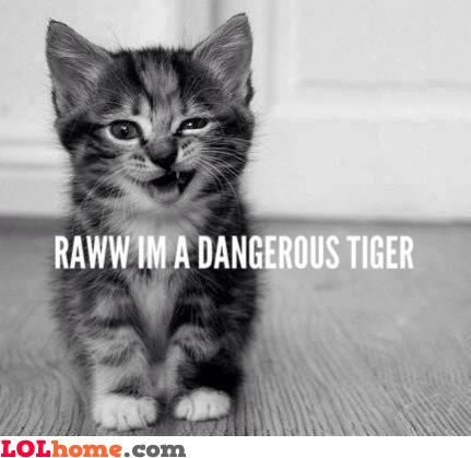 Rawwr, I'm a dangerous tiger
