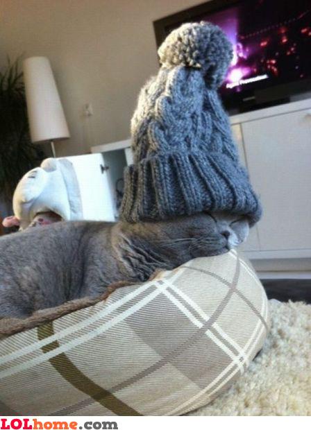 Lazy cat winter style