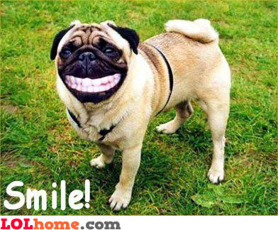 Epic dog smiling