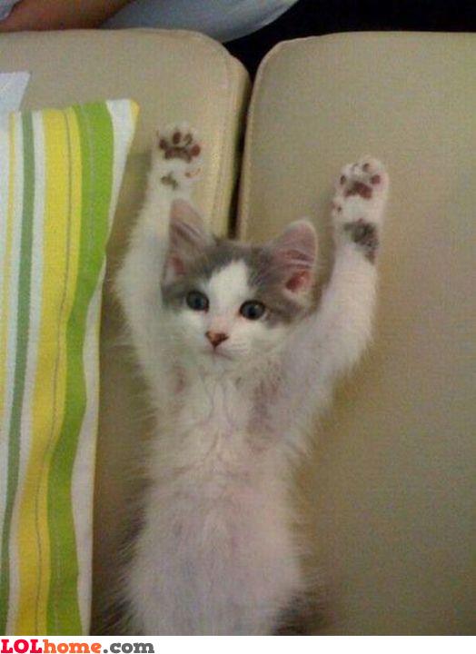 You caught me, I surrender!