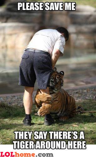 Tiger, WHERE?