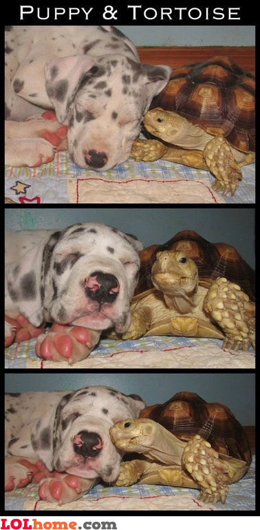 Puppy and Tortoise