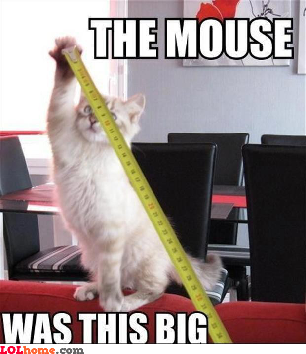 Huge mouse, really