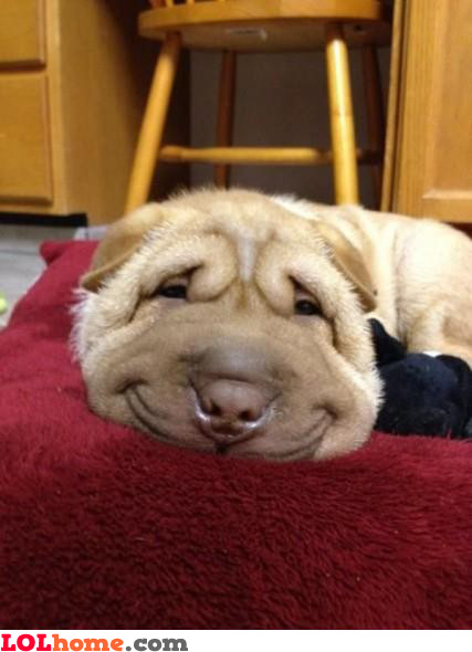 Dog loves to smile
