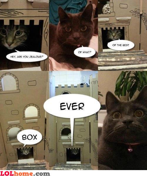Epic cat box